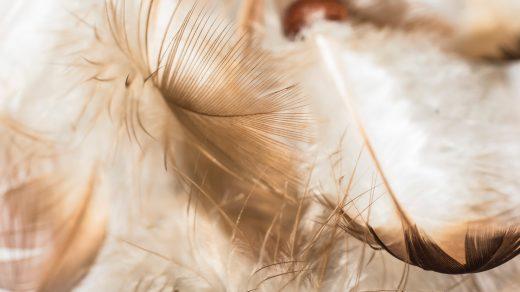 Serafino preposto al coraggio angel